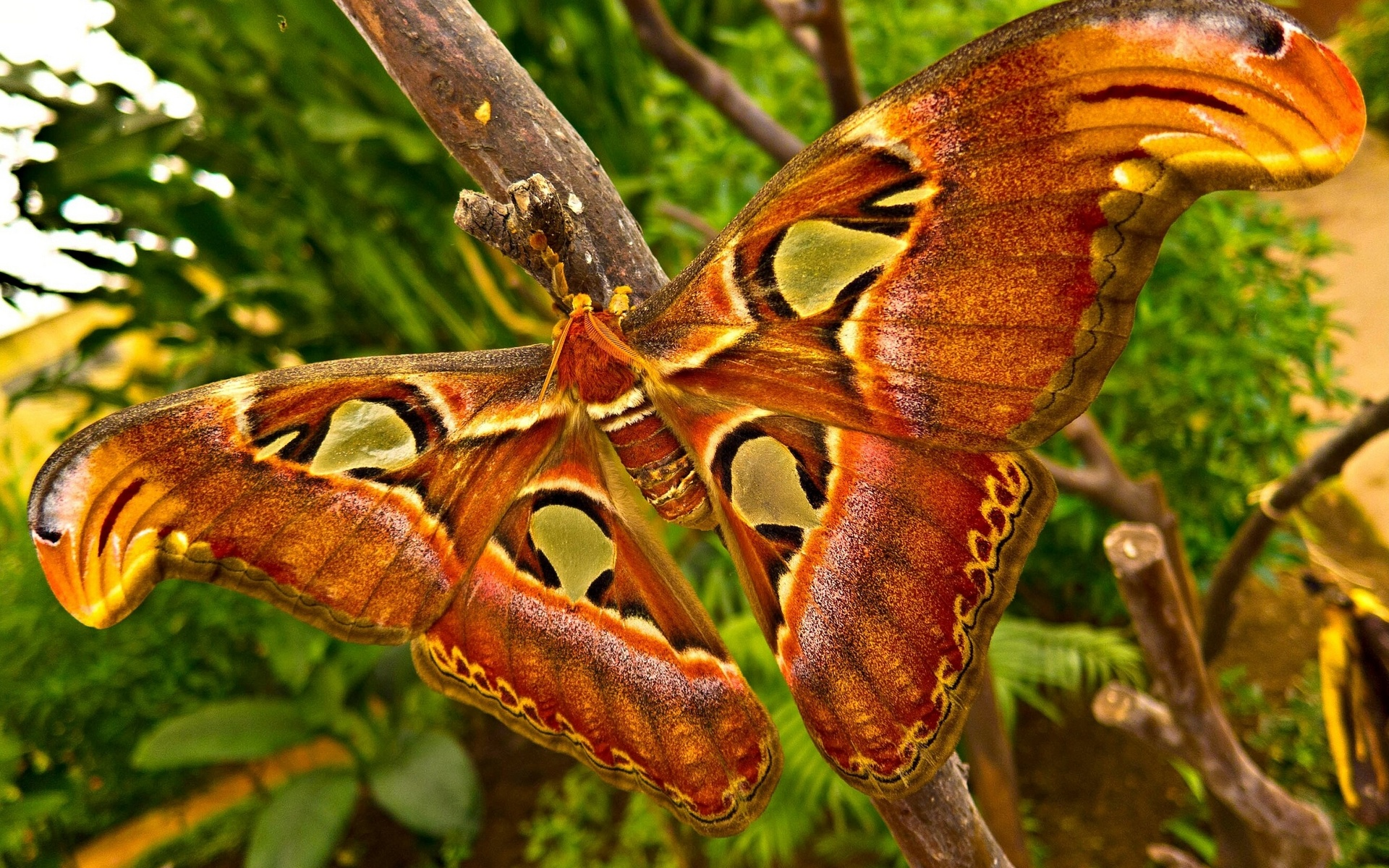 Tropical Rainforest Animals Wallpaper | www.pixshark.com ...