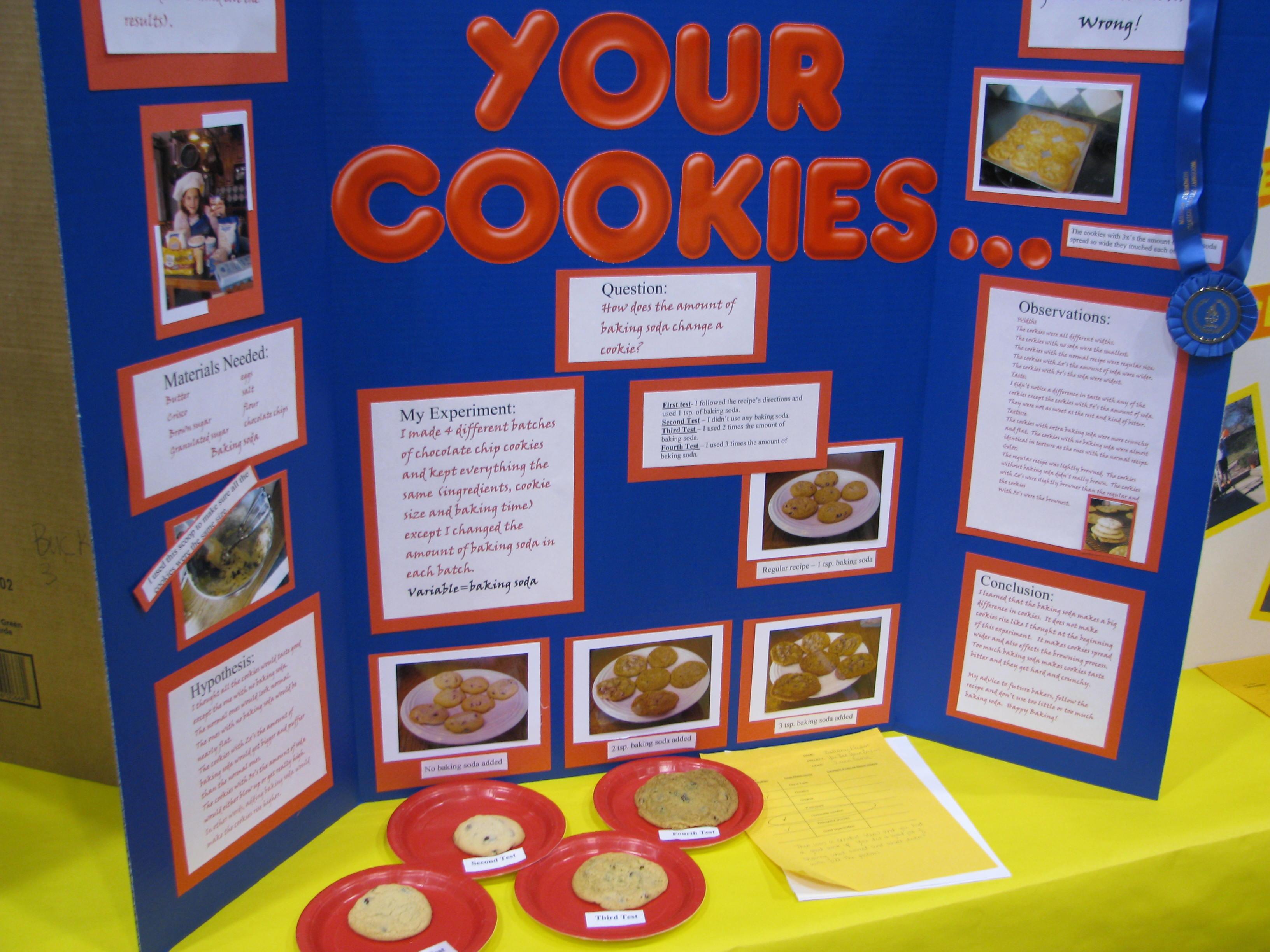 science fair essay format